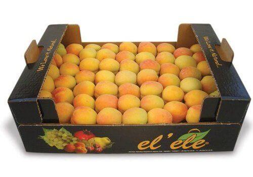 Khay giấy đựng trái cây xuất khẩu